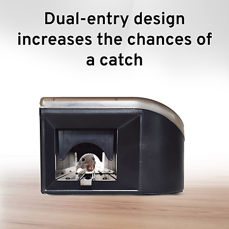 dual entry