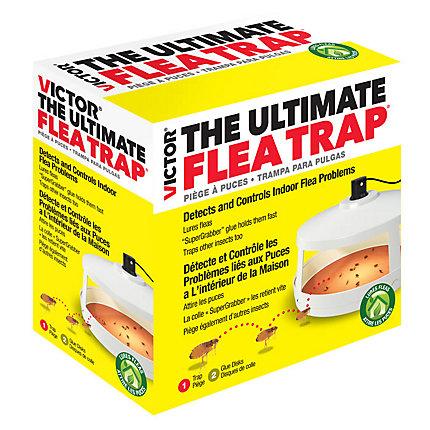 Victor 174 The Ultimate Flea Trap Non Poisonous Flea Trap