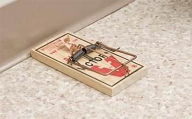 7 Mouse Trap Mistakes Your'e Making