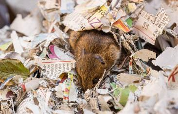 Diagnose Your Problem Nests And Burrows