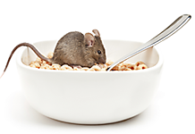 Mouse in Cereal Bowl. Food  sc 1 st  Victor & How to Get Rid of Mice and Rodents | Rodent Proofing Your Home