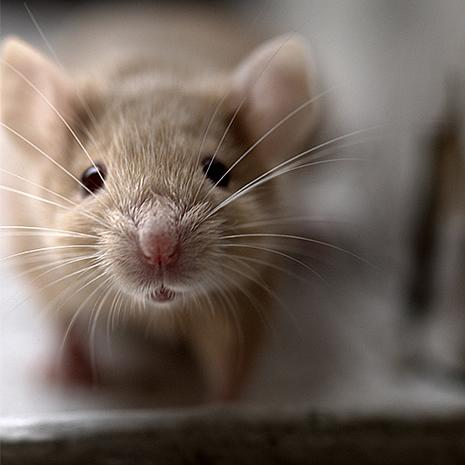 Reduce Exposure to Mice