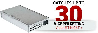 Catches Up To 30 Mice Per Setting