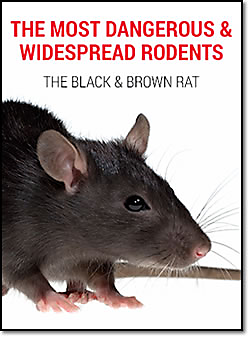 Most Dangerous Widespread Rodents
