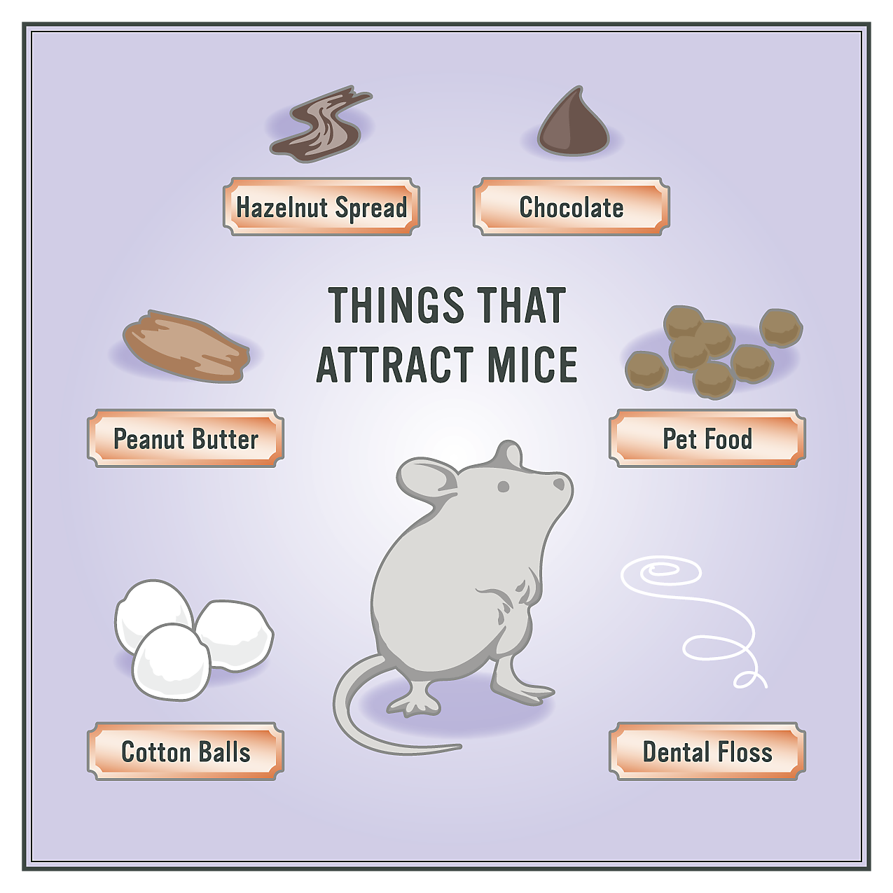 How to Get Rid of Mice in 5 Easy Steps