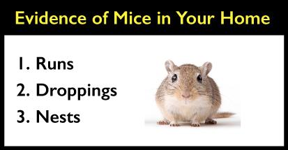 How To Get Mice Out Of Your Walls Air Ducts And Crawl Spaces