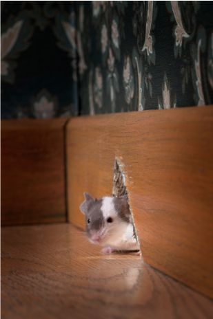 Mice In Walls 5