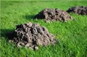 Mole Mounds