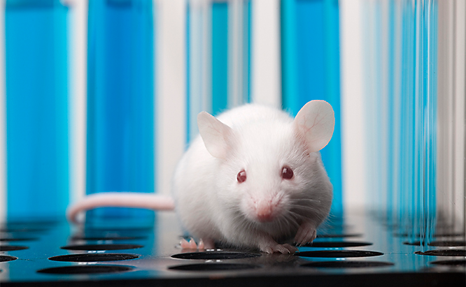 Laboratory mouse allergy research