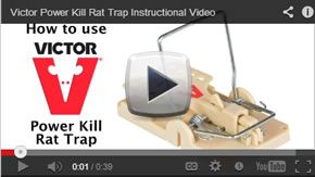 How To Use The Victor Power Kill Rat Trap