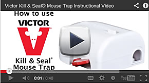 Kill and Seal Mouse Trap Video