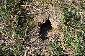 Mouse Hole In The Ground