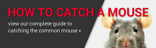 Learn How To Catch A Mouse