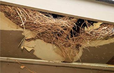 A rat nest in a ceiling