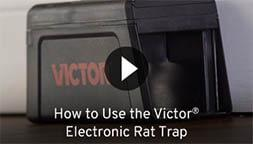 How to Use the Victor Electronic Rat Trap