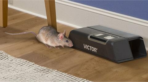 Make Rodents Comfortable First