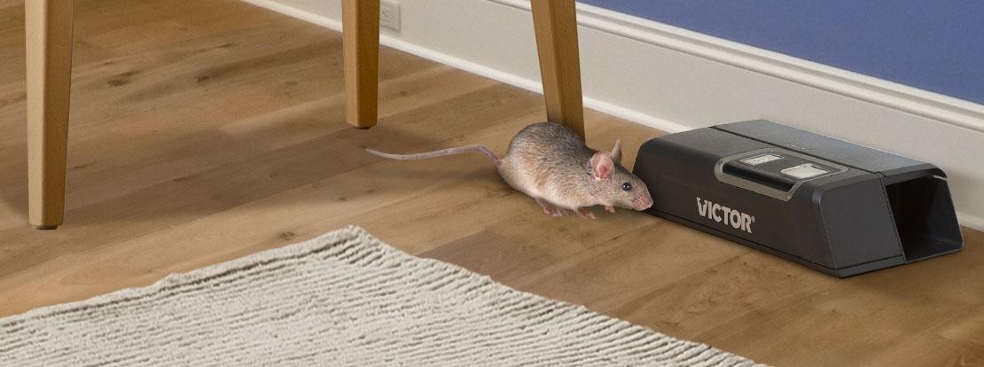 7 Mouse Trap Mistakes You Re Making