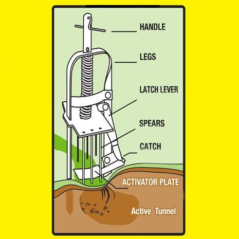 How to Set the Victor Mole Trap