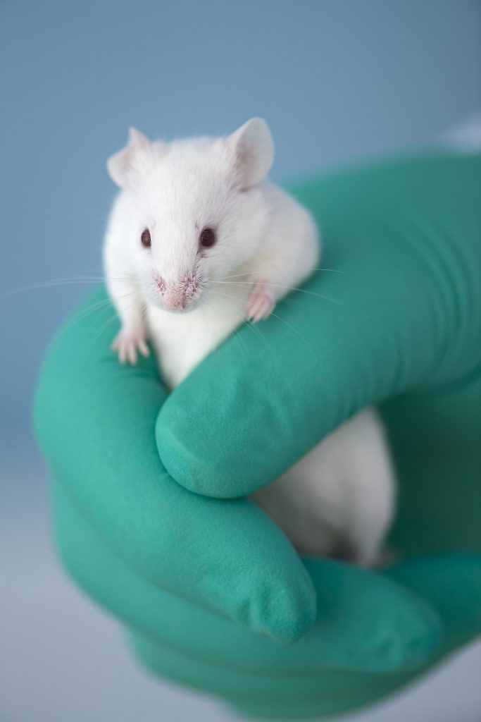 Tiny white mouse attempts to climb out of a green gloved hand