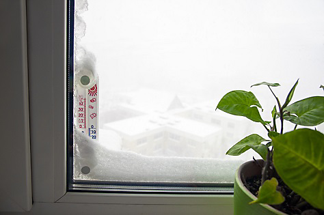 preparing your home for winter - plant by window with snow on it